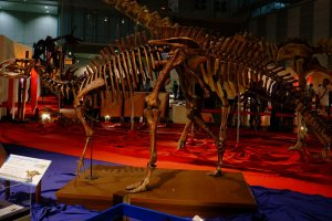 Fukui Prefecture has been home to numerous dinosaur fossil discoveries