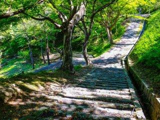 В парке есть удобные прогулочные дорожки по бокам которых весной цветут вишневые деревья
