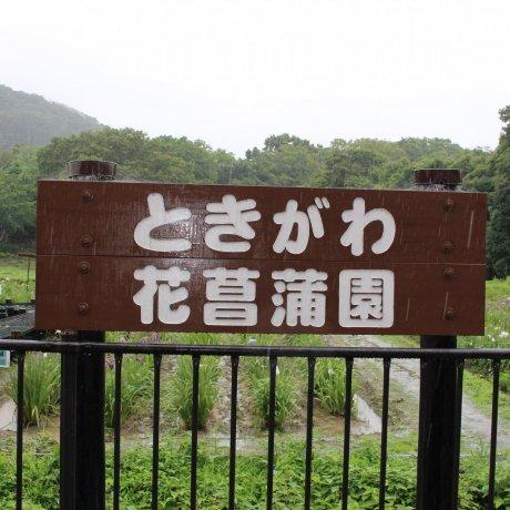 Tokigawa Iris Garden Festival