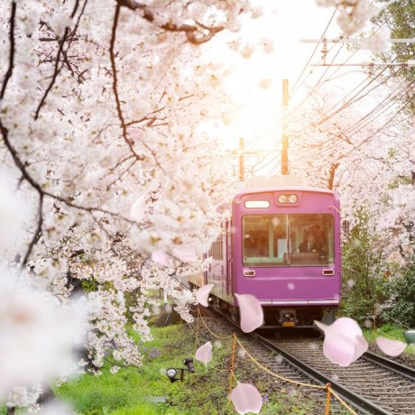 Kyoto: Access & Transport Guide