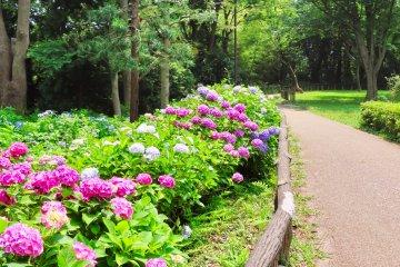 Hodogaya Park - Front of Hydrangea Garden