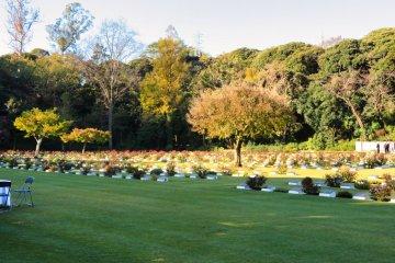 Yokohama Commonwealth Cemetery Roses