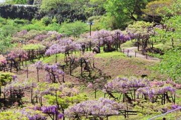 Overlooking the Wistera Garden