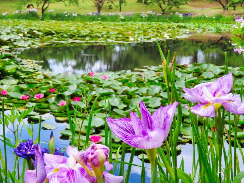 Odawara Flower Garden, June 2021