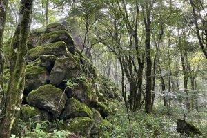 Classic moss-covered rocks