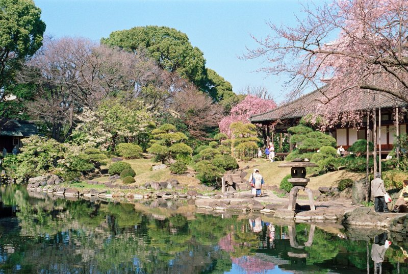 Sakura season at Denboin Garden
