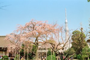 The grounds of Denboin also give a great view of Skytree, offering a wonderful juxtaposition of tradition and modernity