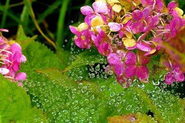 거미줄 위의 물방울