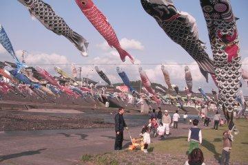 Kamo Koinobori Festival