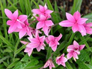 마을은 이런 작지만 개성있는 꽃들로 화사하게 빛난다.