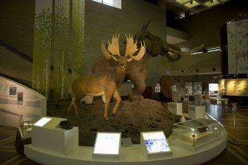 The first display as you enter before making your way to the first exhibit at the Osaka Natural History Museum near Nagai Park