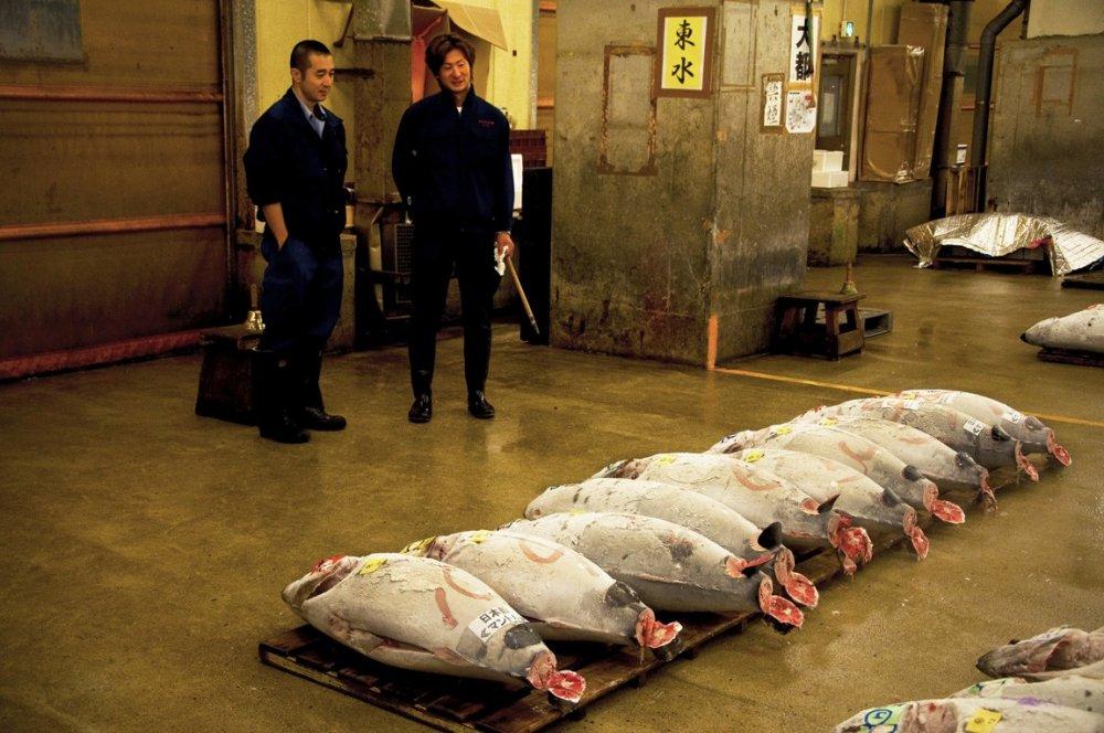 Staring at  the first rows of frozen tuna at Tsukiji Fish Market
