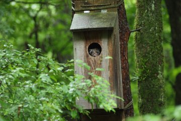 Flying squirrel house