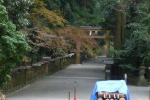 Torii, downhill view