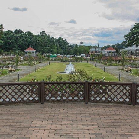 마에바시 장미 공원