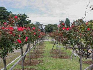 Bạn không cần chiếc kính màu hồng để ngắm nhìn công viên này