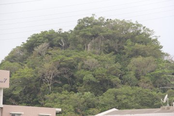 <p>This lone wooded hilltop is your destination</p>