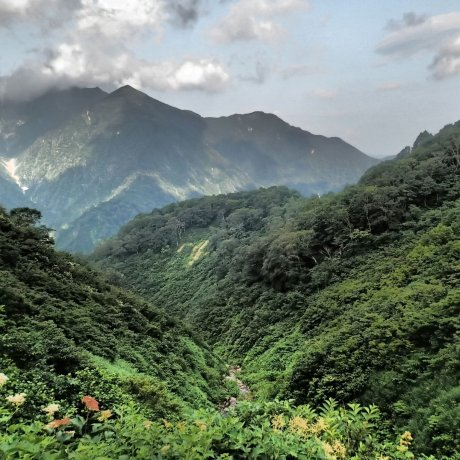 เดินป่าภายใต้ร่มเงาของทะนิกะวะ