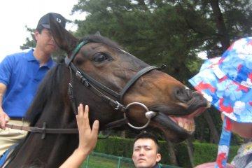 JRA宇都宮「馬に親しむ日」フェスティバル