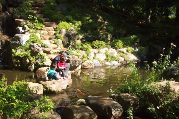 A grandpa and his beloved grandchildren observing the koi fishes in the pond.