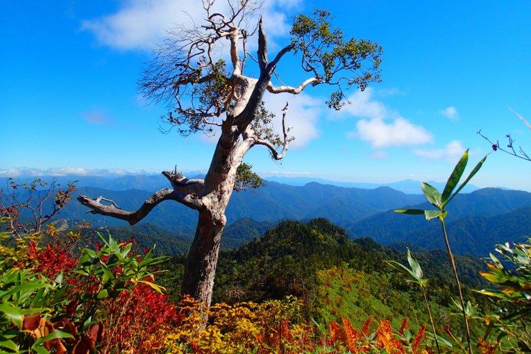 Pendakian Musim Gugur Naeba