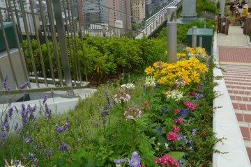 Flowers in Sky Farm