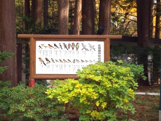 Amusingly, I saw none of the birds illustrated on the board that were supposed to be natural to the Maruyama park, but dozens of crows (not illustrated).
