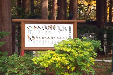 <p>Amusingly, I saw none of the birds illustrated on the board that were supposed to be natural to the Maruyama park, but dozens of crows (not illustrated).</p>