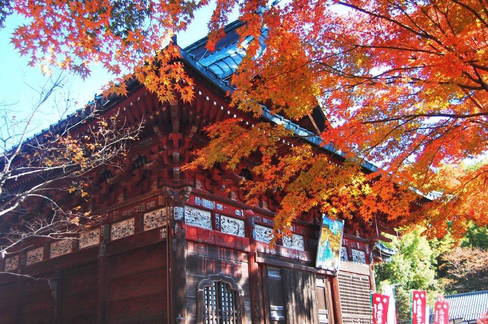 Dedaunan yang menguning menghiasi kuil Shimabuji.