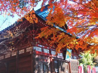 Autumn foliage covers Shimabuji Temple