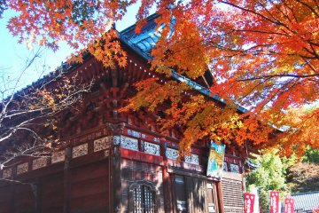 Autumn at Shimabuji Temple