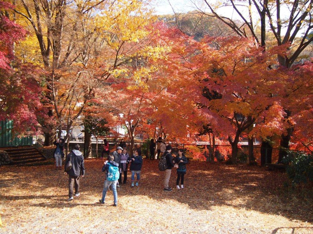 جبل تاكاو وهو يعج بالناس في صباح يوم الثلاثاء . بدا لها أن تكون وجهة مفضلة محلية لنزهة عائلية .