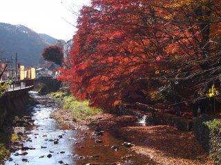 حتى في أواخر نوفمبر تشرين الثاني شجرة موميجي حمراء مذهلة