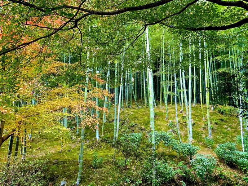 Japan travel - Jardin de bambu talavera ...