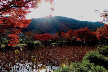 <p>Lotus pond</p>