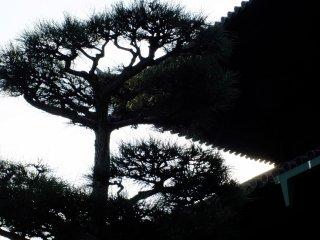 松と寺屋根のシルエット