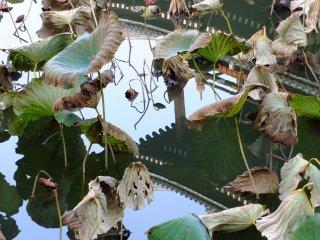 蓮池に映し出された三門。7月下旬から8月に来れば、美しく咲き誇る満開の蓮の花を楽しめる