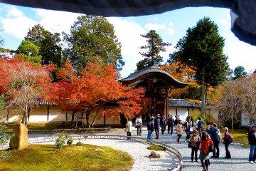 아름다운 붉은 잎이 있는 사원 구내