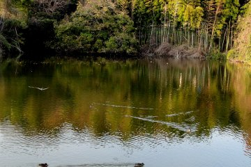 The pond at the entrance