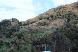 12月、まだ葉の緑だけだが、つぼみは膨らみ始めている。満開の時はこの斜面がすべて水仙の花で埋まる。絶景である
