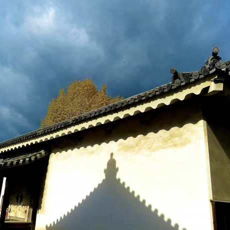 Kyoto Nijo-jo Castle's Gardens