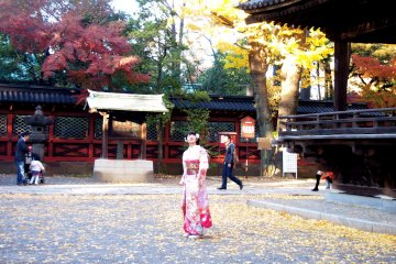 <p>A Japanese girl having a photoshoot against the age-old structures in the&nbsp;Nezu Jinja.&nbsp;</p>