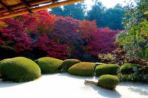 前景に白砂、中景にツツジの刈り込み、遠景に楓が配された庭