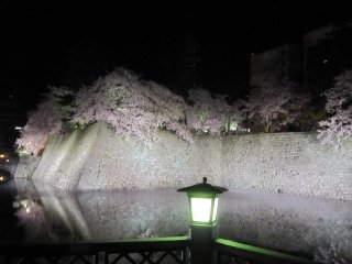 Green light from the lantern is added to the colors of cherry trees