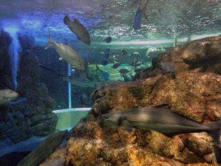 Um dos maiores tanques do aquário acolhe vários peixes vivendo em conjunto