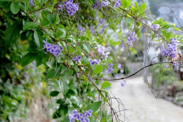 <p>Lovely flowers and plants are plentiful along the path.</p>