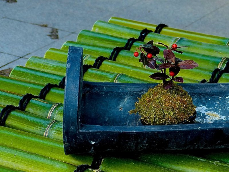 <p>Cute little bonsai on bamboo lid covering a well</p>