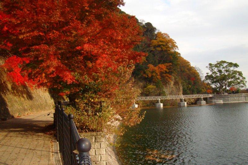 누노비키 저수지 주변 가을색