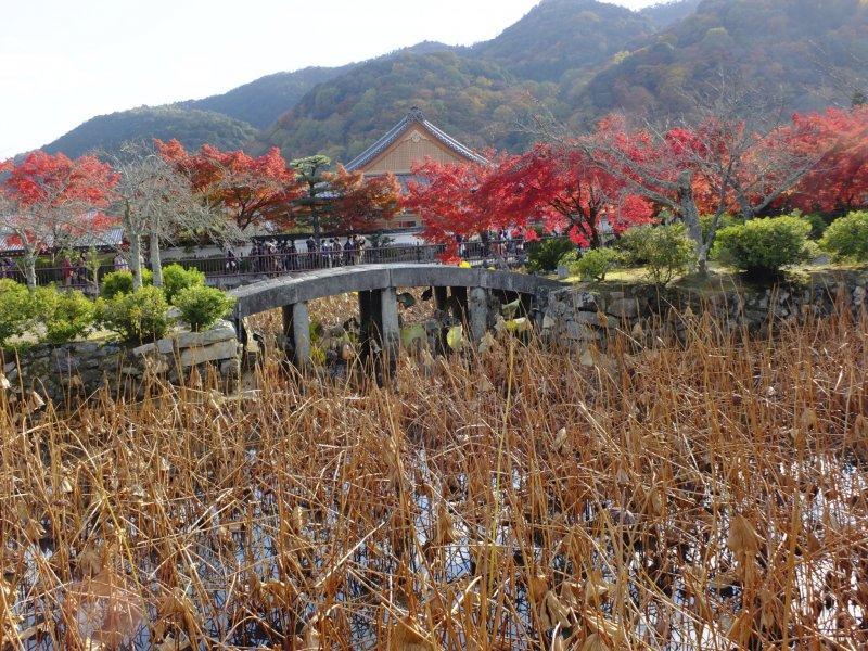 연꽃 연못이 여름을 기다리고 있다