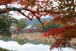 池の対岸から大覚寺を臨む